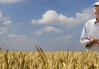 Ruszają ubezpieczenia upraw
