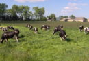 2018 rokiem przełomowym dla polskich hodowców?