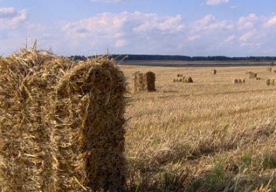 Bioelektrownie zasilane słomą szansą na dodatkowy dochód dla gospodarstw rolnych
