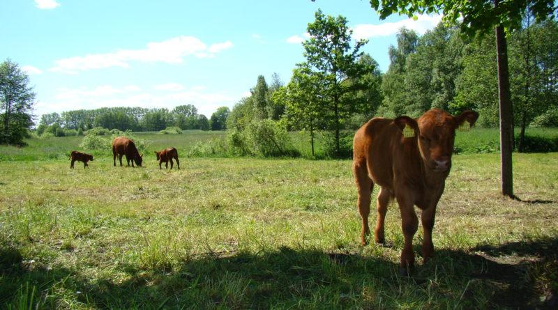 """""""Modernizacje gospodarstw rolnych"""" – kolejny nabór wniosków od 29 czerwca"""