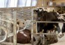 Fińskie firmy rolnicze chcą współpracować w Polsce